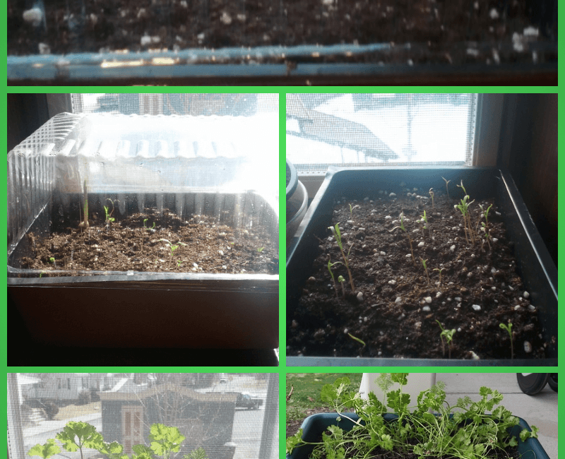 Dollar Tree Herb Garden Starter Kit