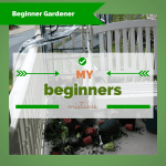 A Beginner Gardener, First Vegetable Garden Mistakes