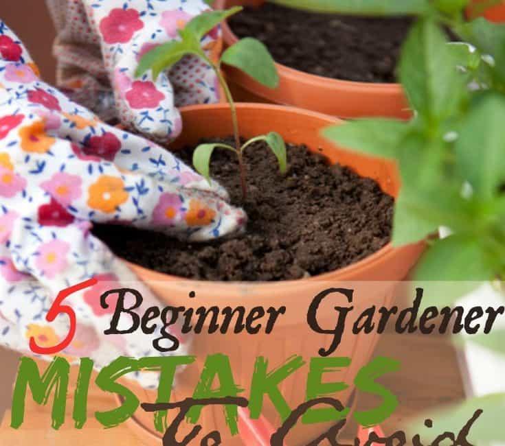 5 Beginner Gardener Mistakes To Avoid