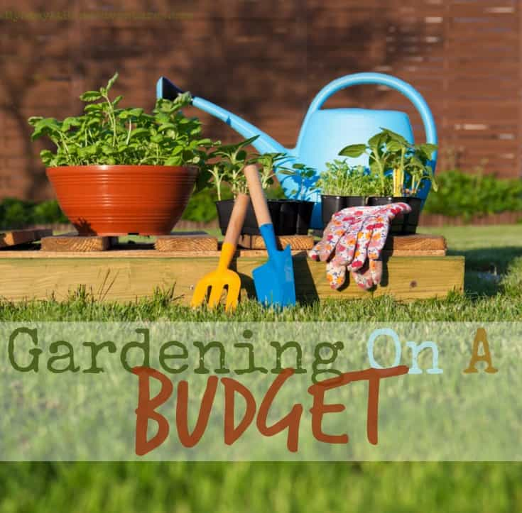 Gardening On A Budget My Stay At Home Adventures