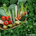 7 Easy Vegetables to Grow At Home
