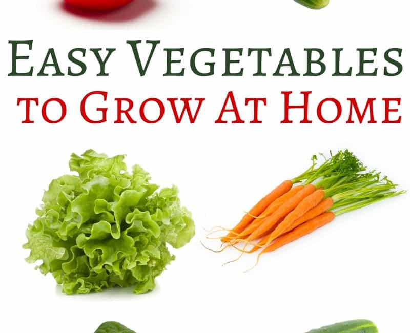 Seven Easy Vegetables to Grow At Home