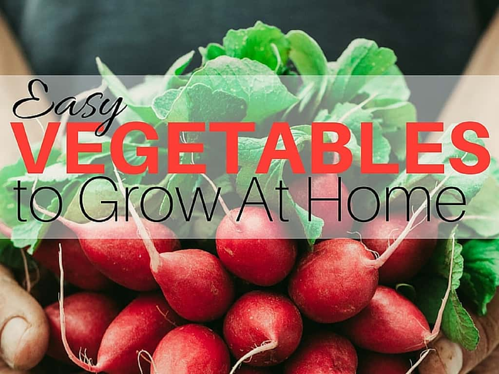Starting a garden this year? Learn what are the Easy Vegetables to Grow At Home to help you get your garden going this year.