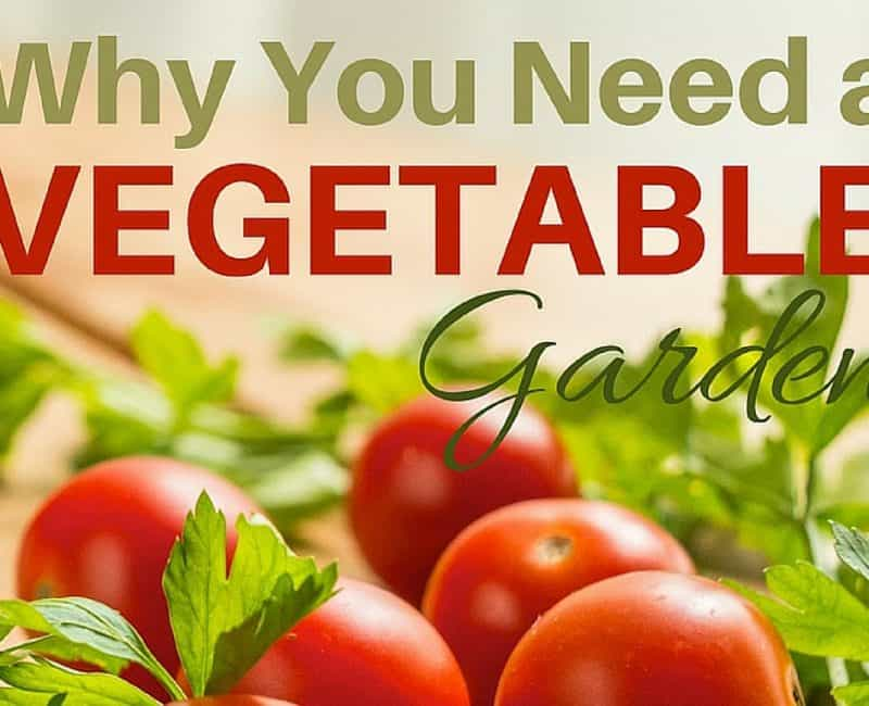 8 Never Thought of Reasons You Need a Veg Garden This Year!