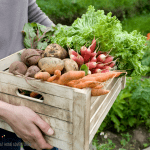 10 Ways to Make Money from Your Garden This Season!