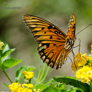 How to Set Up a Butterfly or Hummingbird Garden at Home