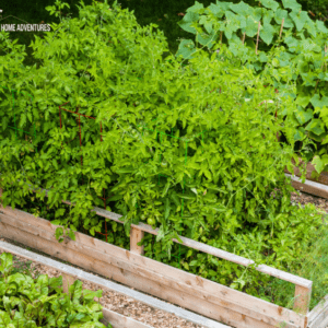 How To Build Raised Vegetable Garden Beds For Beginner Gardeners