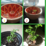 How To Regrow A Carrot Scraps