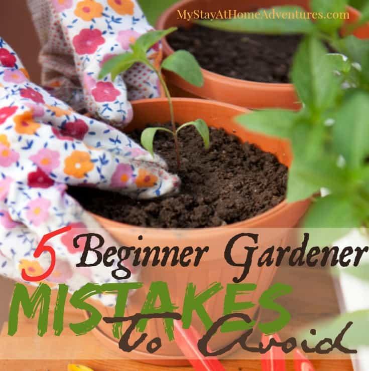 5 First Time Gardener Mistakes To Avoid This Season