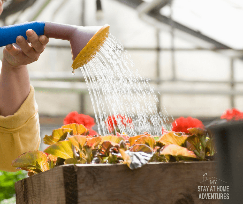 Over watering is another beginner gardening mistake to avoid.