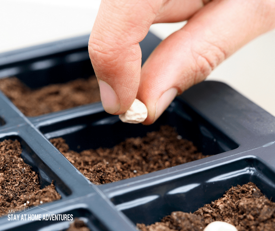 Gardening on a budget - 12 budget friendly tips to start growing your garden today.