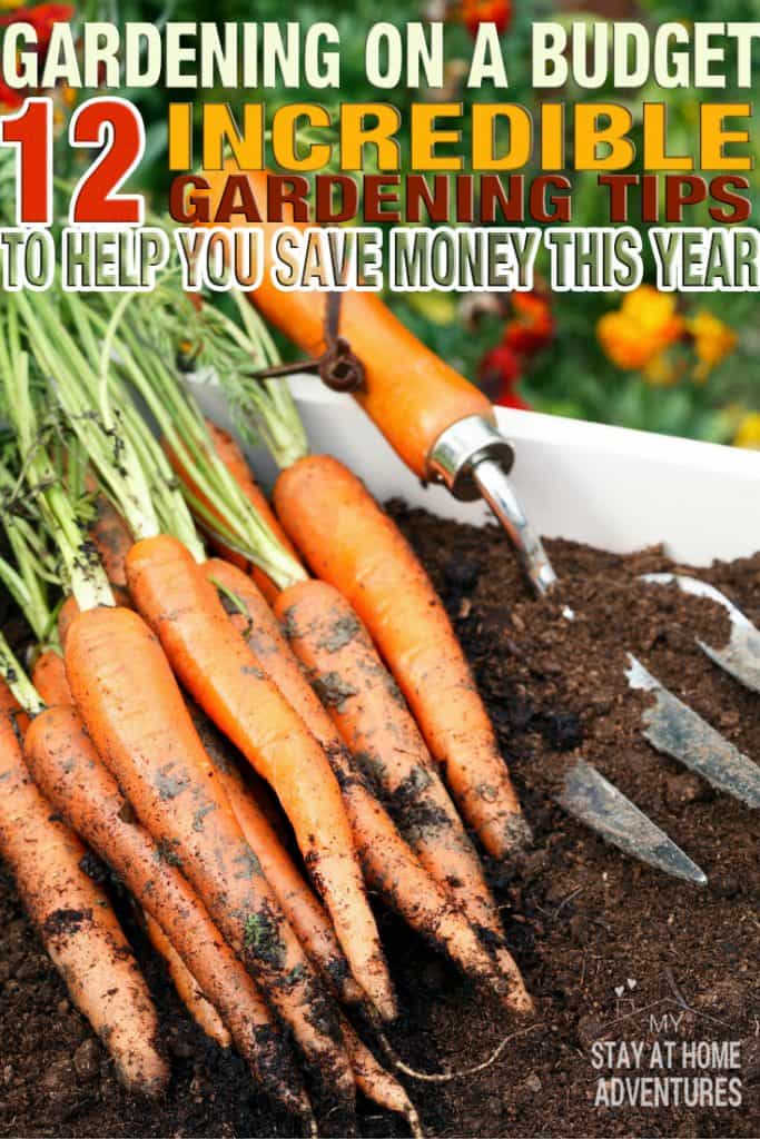 To grow a garden you don't have to waste money. Learn how you can start gardening on a budget with these twelve tips. Follow these helpful budget friendly gardening tips and start growing your garden today!