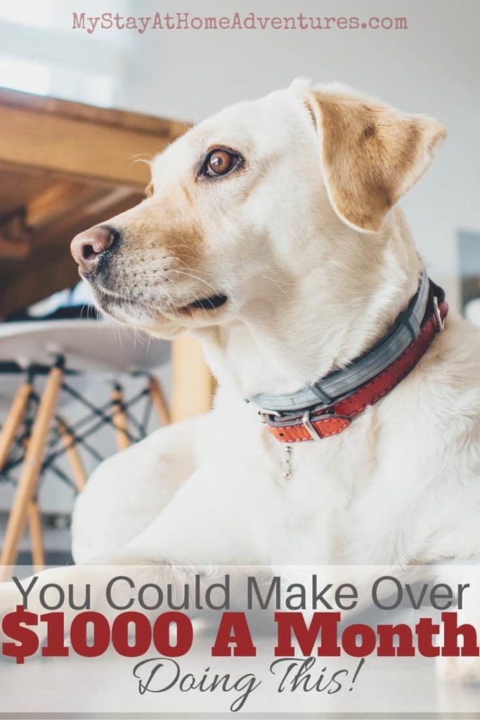Looking for a way to make extra money? Learn how you could make over $1000 a month doing this! Dog sitting! Learn more and where to get started.