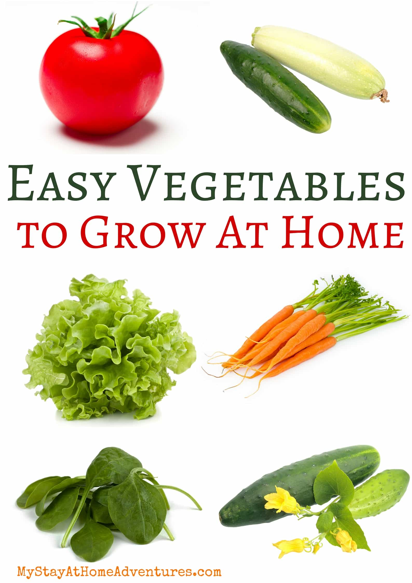 Starting a garden this year and don't know what to grow? Learn what are the top 7 easy vegetables to grow to get your garden on the way. #garden #gardeningtips #beginnergardener via @mystayathome