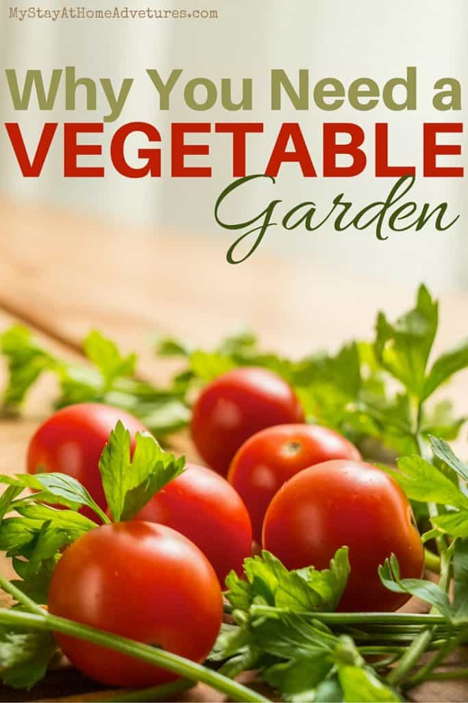 Want to save money on grocery this year? Then start a vegetable garden and not only will you only save money you will be doing you and your family good. Learn the top reasons why many people start a vegetable garden and begin planning your garden today!