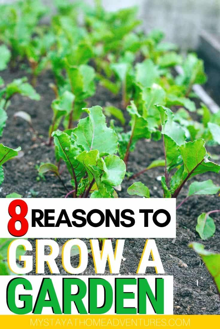 Thinking about starting a vegetable garden? There are eight reasons why a vegetable garden is a great investment for you, your family, and financially. via @mystayathome