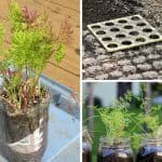 11 Creative Ways To Plant Carrots