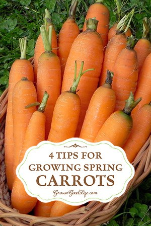 tips-for-growing-carrots-vert-growagoodlife