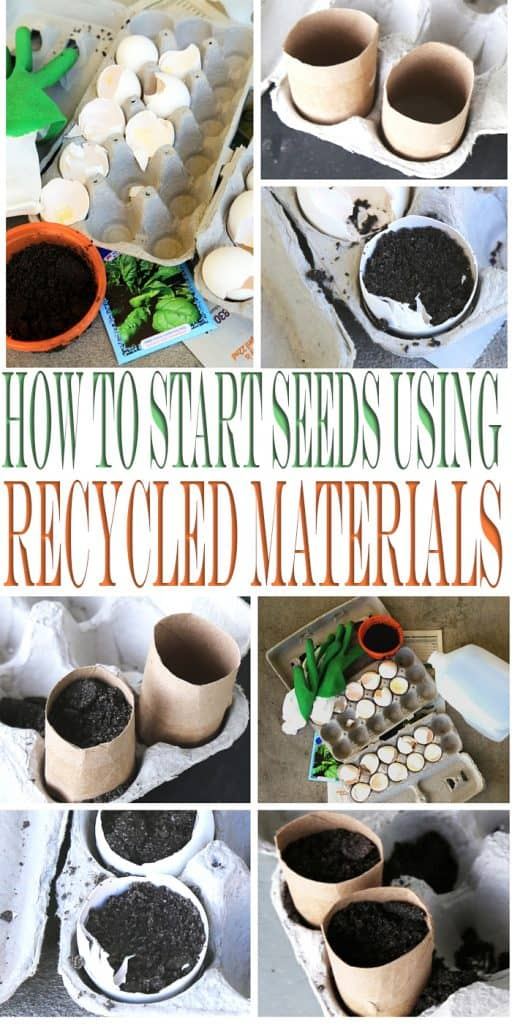 Start your seed starting using recycled materials this gardening season. Learn to grow seeds using egg cartons and toilet paper rolls.