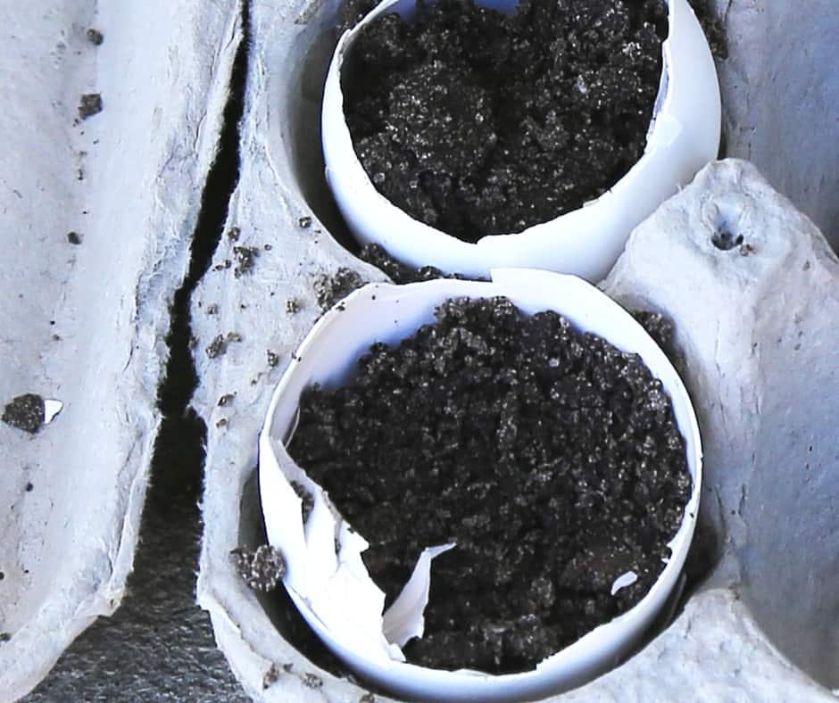 planting seeds inside eggshells(1)