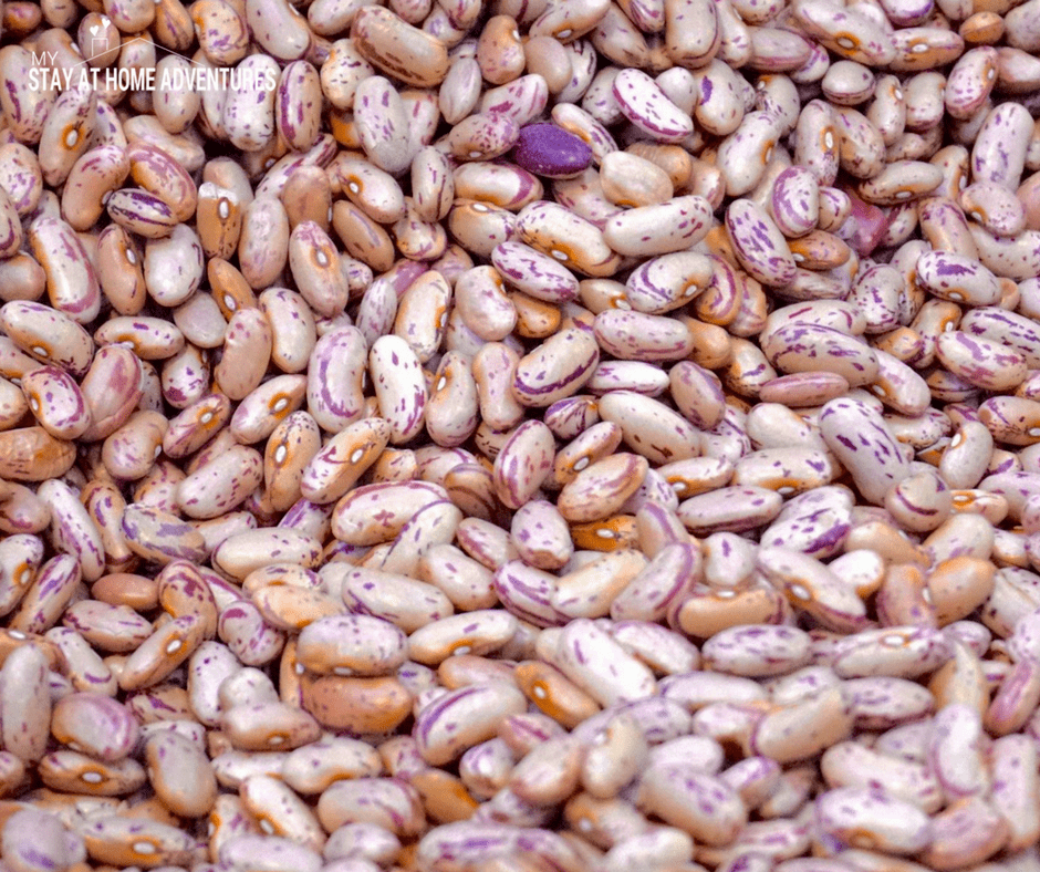 A great food pantry staple to have in your home is dried beans.