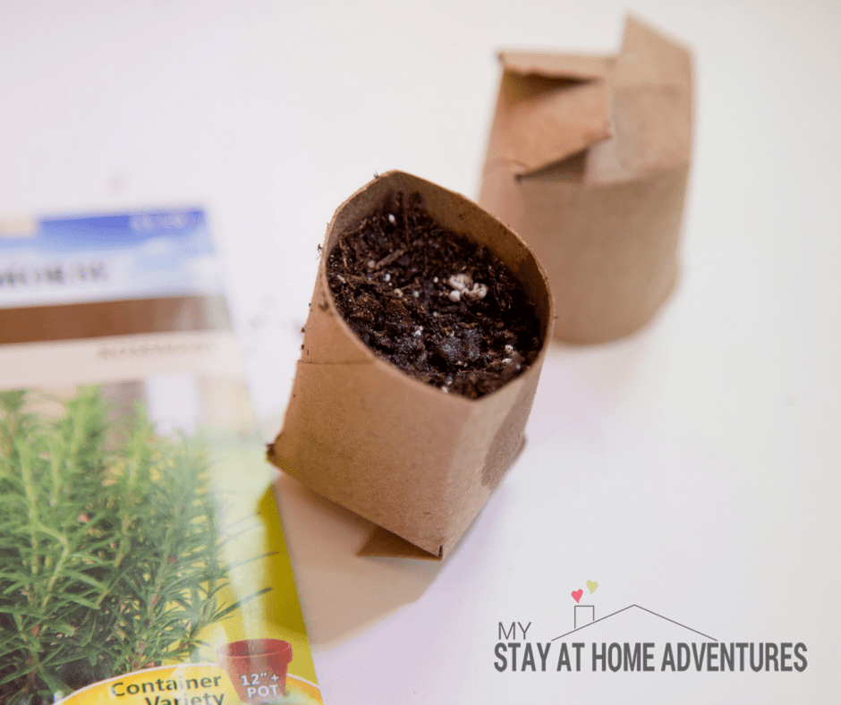 This toilet paper seed starter tutorial is all you need to seed starting indoor this season. Learn all you need to know and start growing your garden today.