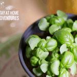 6 Indoor Gardening Mistakes Beginners Should Avoid