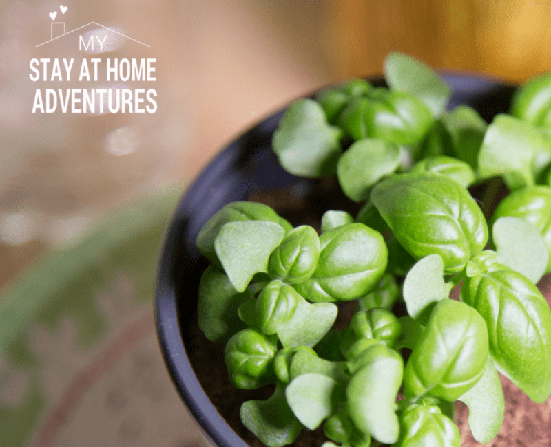 6 Indoor Gardening Mistakes Beginners Should Avoid