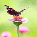 Build a Butterfly or Hummingbird Garden at Home