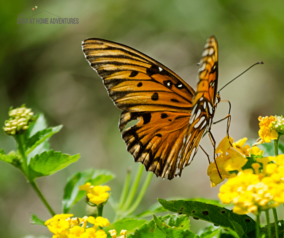 Learn How To Set Up A Butterfly Or Hummingbird Garden At