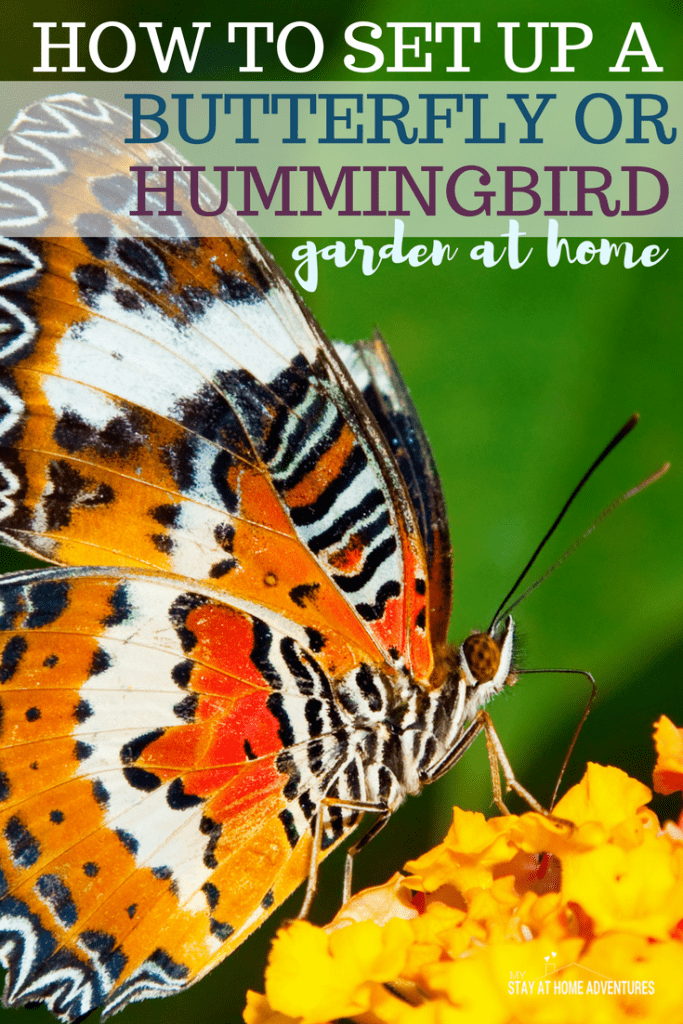 Spring time is here so let's learn how to set up a butterfly or hummingbird garden the right way with these helpful tips to help you this season.