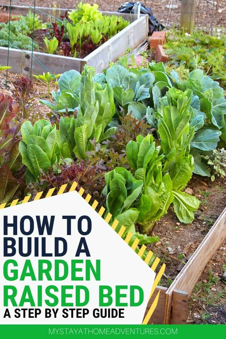 New to gardening? Learn how to build raised vegetable garden beds including what wood to use, how to build one for less than $15. via @mystayathome