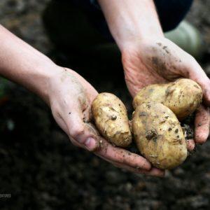 4 Vegetable Gardening Tips For Beginner Gardeners