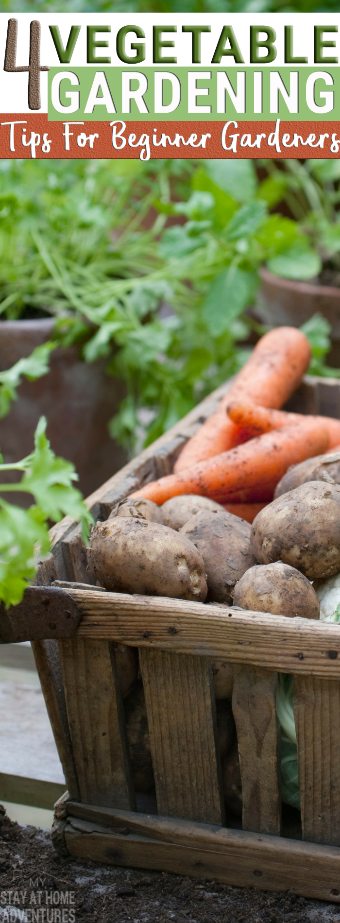 Beginner gardener?  No problem! These vegetable gardening tips are going to help you and motivate you to start your vegetable garden this season without fear of failing.