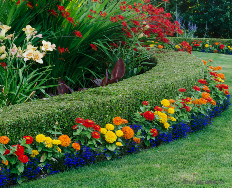 How to Add Color to Front Yard Landscaping