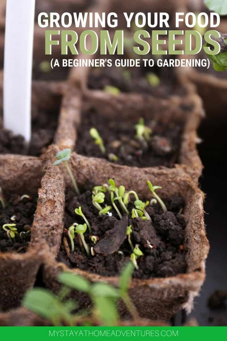 Growing your food from seeds is possible and when you follow these tips you will be able to start growing today. Learn how to grow food from seeds. via @mystayathome