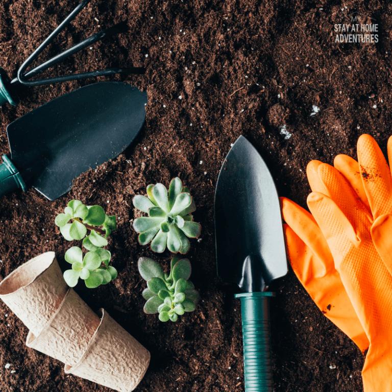 Cheap Ways to Improve Your Garden Soil