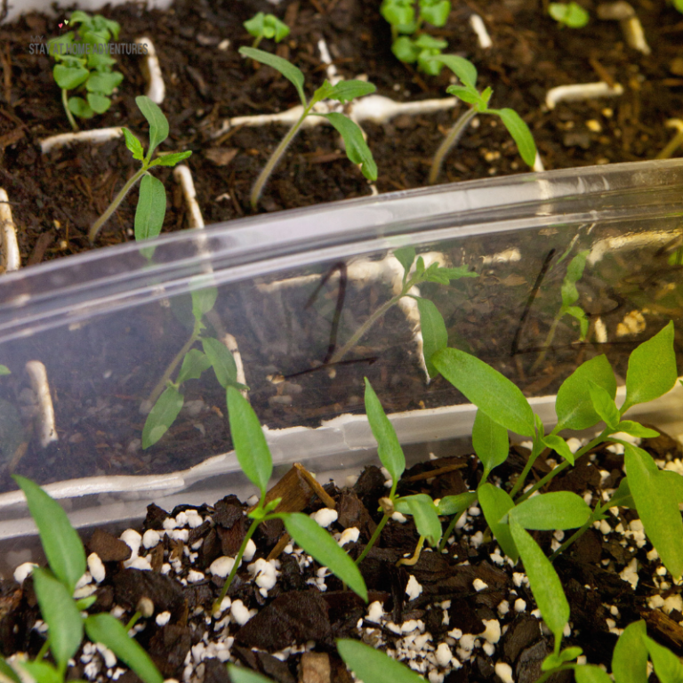 Frugal Ways to Start Your Seeds
