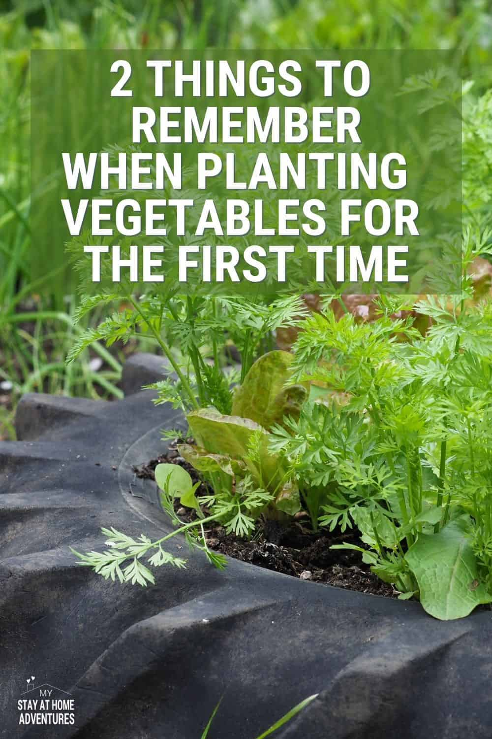 If you are a beginner gardener, when to plant vegetables this season is important. Learn two important things before growing. via @mystayathome