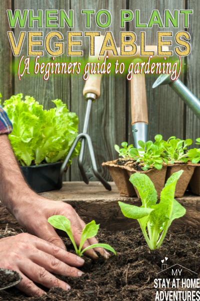 If you are a beginner gardener when to plant vegetables this season is important. Learn the tips to help start planting your vegetable gardening.