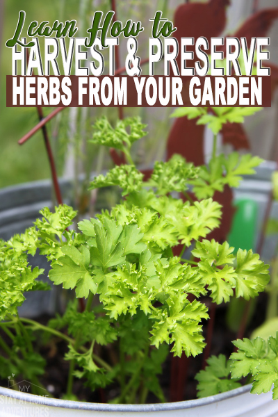 This gardening season learn how to harvest and preserve herbs with these tips.