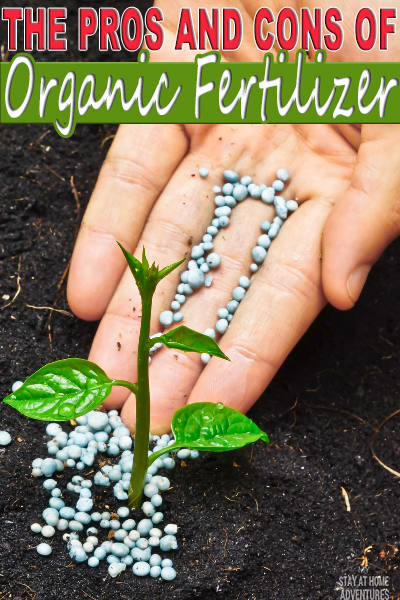 If you are a beginner gardener learn the pros and cons of organic fertilizers and how they can affect your garden this season,