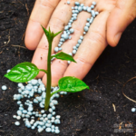 Pros and Cons of Organic Fertilizer