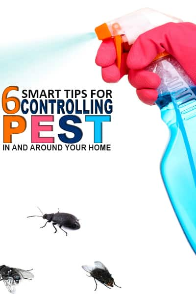 Pest control in homes is a reality many of us have to deal with. Learn six tips for controlling pest in and around your home.
