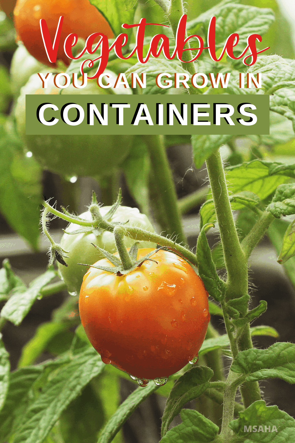 Learn all you need to know about what vegetables to grow in containers. From what are the best vegetables to easiest to grow in containers. via @mystayathome