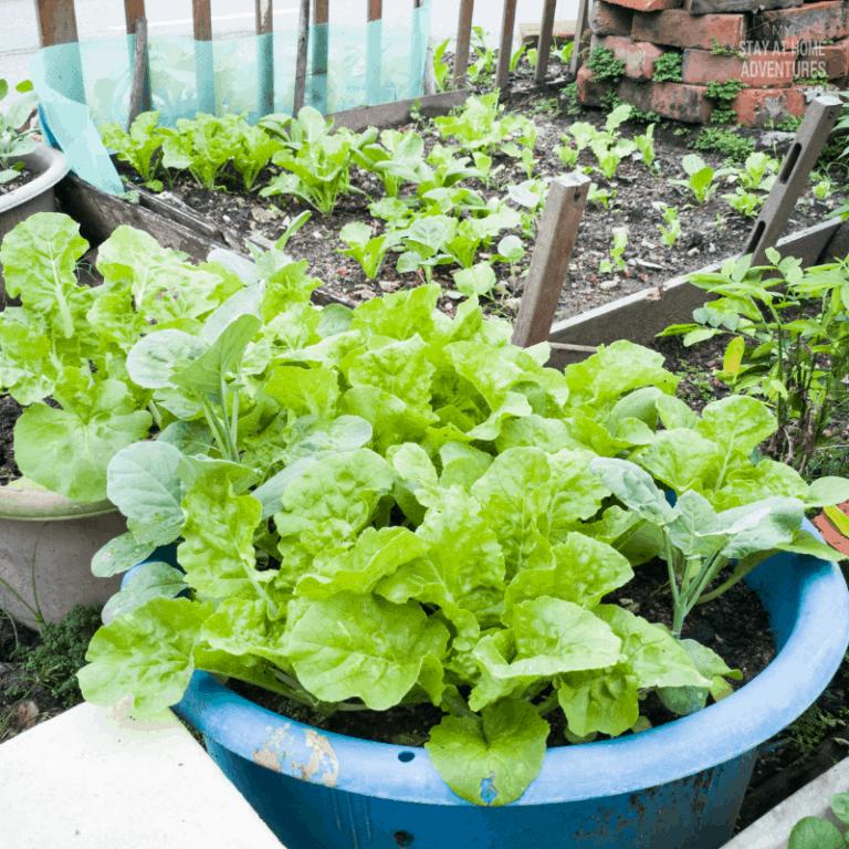 How to Garden Pesticide Free