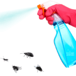 Pest Control: What You Need To know