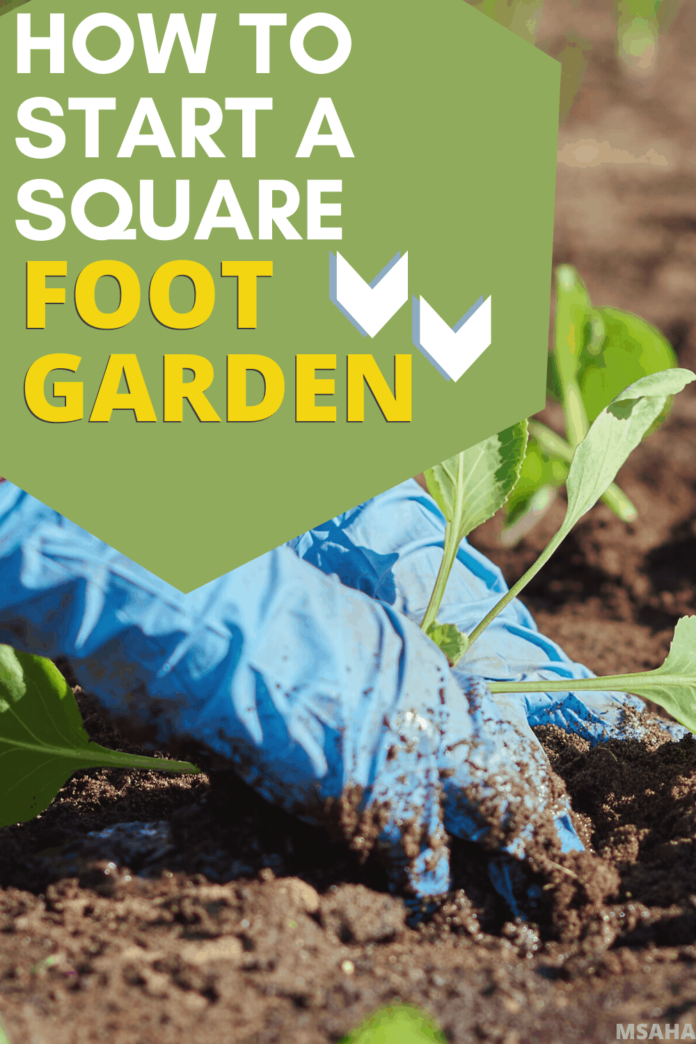 Learn all you need to know about square foot garden from why it is recommended for beginner gardeners to how to build the perfect square foot garden. #gardening #gardeningtips #gardeningforbeginners via @mystayathome