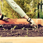 How to Start a Square Foot Garden (A Beginner Guide)