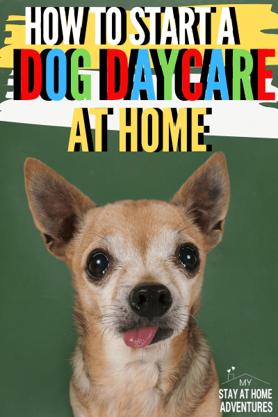 Learn all you need to know about how to start a dog daycare in your home. Get all your questions answered and resources to help you get started. via @mystayathome